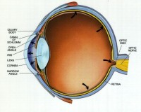Ophthalmology Videos